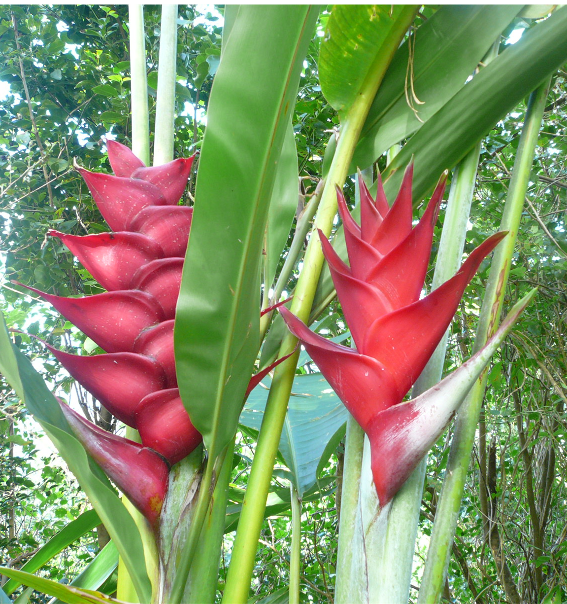 Phantasea Tropical Botanical Garden